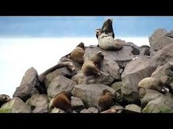 Astoria Sea Lions