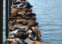 Sealions-mooringbasin