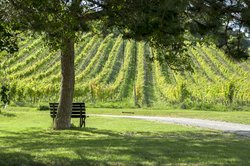 Breathtaking Vineyards to be discovered by your family