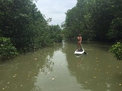 SUP on the Mangroves