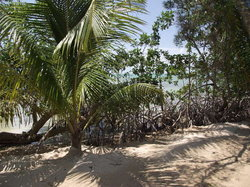 Mangroves on the Beach