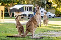 Hang out with the roos