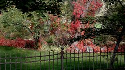 Fall Foliage With Fence