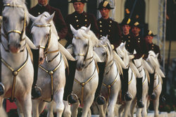 Enjoy the spirit of the traditional Spanish Riding School in Vienna
