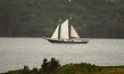Bluenose 2 at Digby gut