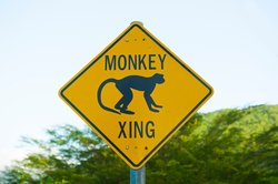 Monkey Crossing Sign