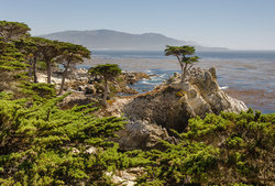 Px Lone Cypress Mile Drive