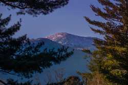 Explore Mount Washington Trees