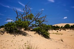 Brush Growing On Jockey S Ridge