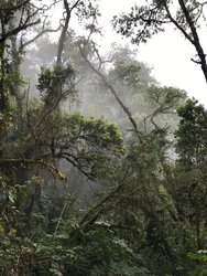 Guatemala Jungle Hiking Tour