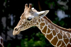 Say hello to friendly creatures while staying at our hotel near the Houston Zoo!