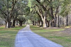 Discover the Rosedown Plantation in St. Francisville Louisiana