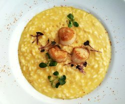 Risotto with carrot and sea scallops