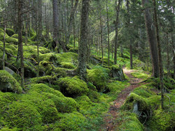 Baxter Creek Trail In Great Smoky Mountains National Park