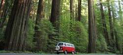 Vw Redwoods