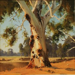 Murray River Gum At Solong. Cm Cm.