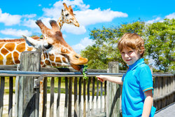 Feeding Giraffes at the Abilene Zoo