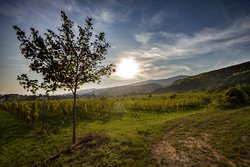 Experience the sunset on the horizon of the vineyards around Gumpoldskirchen
