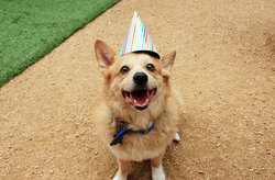 Dog In Birthday Hat