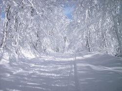 White Gold Snow