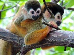 Monkey Tours