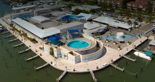 Hotel near Clearwater Marine Aquarium | Holiday Inn Clearwater