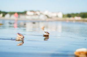Kennebunk Beach Clams