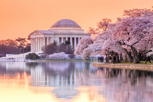 Jefferson Memorial DC Cherry Blossom Festival
