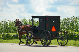 Horse And Buggy Amish Countryside
